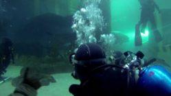 Shark-dive-at-Melbourne-Aquarium