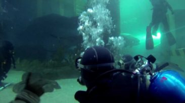 Shark-dive-at-Melbourne-Aquarium